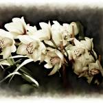 """Orhid"" by RetouchingArt"
