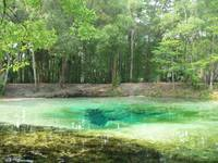 Natural Spring in Swamp