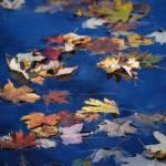 """Autumn Drift"" by BobHurd"