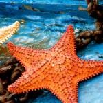 """Starfish"" by marytrostle"