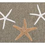 """Seastars on Sand"" by RobinCowles"