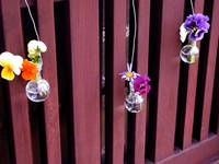 Hanging Pansies
