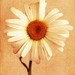 """""""Simplicity"""" by ImageMonkey"""