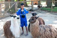 Thawit with Llamas