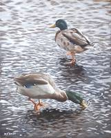 two mallard ducks standing in water