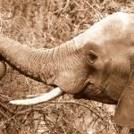 """baby elephant"" by Permen_Mata"