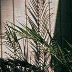 """""""Shadowed Palm"""" by marytrostle"""