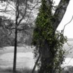 """Days Past"" by marytrostle"