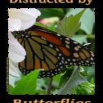 """600-butterfly-dsc04171-distracted"" by quotes"