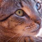 """""""Kit Kat"""" by marytrostle"""