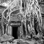"""Cambodia Temple Angkor Tree Roots"" by Aforster"