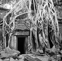 Cambodia Temple Angkor Tree Roots