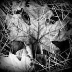 """Imagekind"" by SarahMcD"