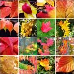 """Fall Leaves Mosaic"" by SarahMcD"