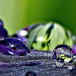 """Dwarf Iris Water Drop 2"" by SkeieScapes"