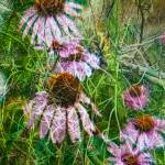 """Cone Flowers and Twigs"" by dbwalton"