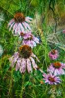 Cone Flowers and Twigs