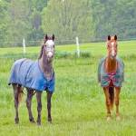 """""""Colorful ponies in Rockwood"""" by tonymoran"""