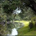"""Sawgrass Stream"" by CricketNoel"