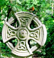 Robin on Celtic Cross