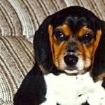 """Clancy Puppy Pic"" by tonymoran"
