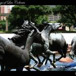 """The Mustangs of Las Colinas"" by SanketBakshi"