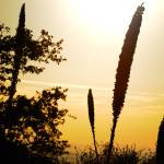 """""""Desert Yucca at Sunset"""" by BrianWancho"""