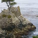 """The Lone Cypress"" by BrendanReals"