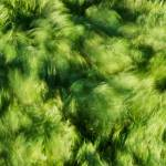 """Grass Whirlpool 3"" by hideakisakurai"