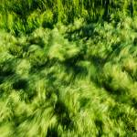 """Grass Whirlpool 2"" by hideakisakurai"