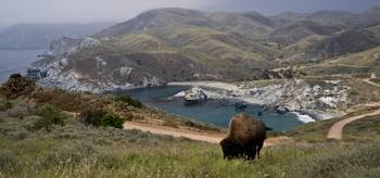 Buffalo Above Little Harbor Coast