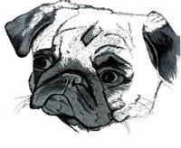 Pug Colored Pencil Art