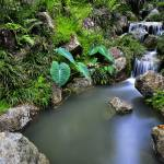 """""""little stream at the tropical forest"""" by art-slice"""