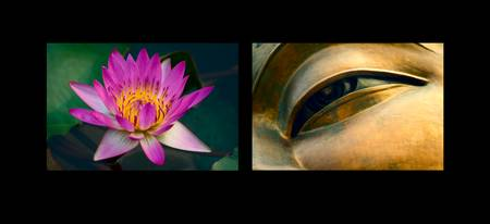 Lotus and Eye