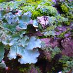 """Forest Floor"" by linneaheide"