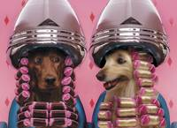 Dogs Under Hair Dryers