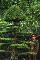 Vietnamese Soldier Hiding in the Topiary