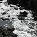 """Silvery Silhouette, Falls Creek"" by janemcdougall"