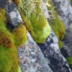 """Moss & Lichen, Falls Creek, Victoria"" by janemcdougall"