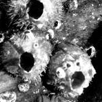 """Barnacles on a tree (black and white)"" by stephaniemaria2001"
