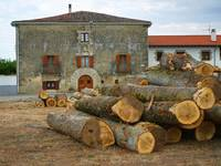 The Logs and the House