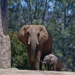 """Mother and Baby Elephant"" by RobinCowles"