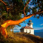 """Madrone & Lighthouse"" by Inge-Johnsson"