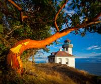 Madrone & Lighthouse