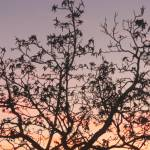 """Branches against the Sky"" by GloriaLee"