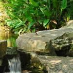 """""""Arboretum Oasis"""" by julieandel"""