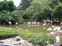 More Pink Flamingos