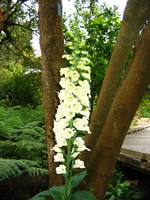 Tall white Flowers on the Tree