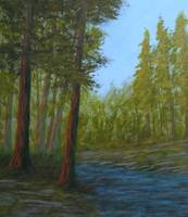 Redwoods by the River