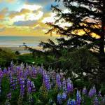 """""""Pacific Ocean Sunset, Oregon 1"""" by ShaneWells"""